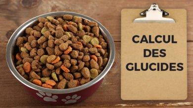 Comment calculer le taux de glucide dans une croquette pour chien. Réponse de CROQ' la Vie à Alertes Croquettes Facebook
