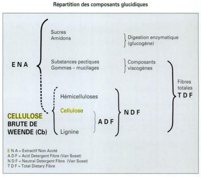 Graphique des composants glucidiques
