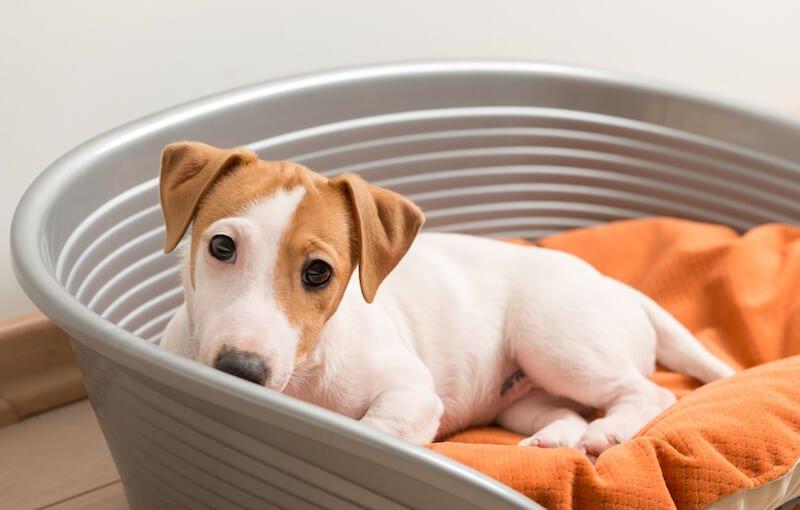 Quelles sont les origines et les causes de la diarrhée chez le chien ?