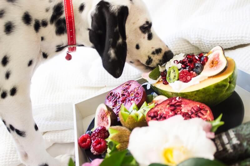 Légumes et fruits sont majoritairement à l'origine de la dermatite atopique chez le chien, et de ses démangeaisons
