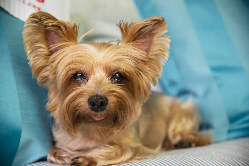 Il existe d'autres causes à la dermatite du chien : surinfection ou effets secondaires des médicaments