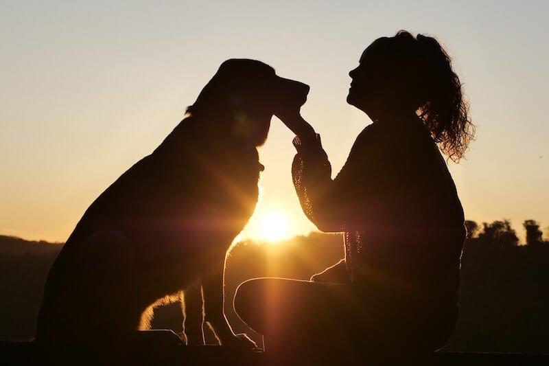 Veillez à choisir la meilleure alimentation pour régler les soucis d'infection urinaire et de cystite du chien