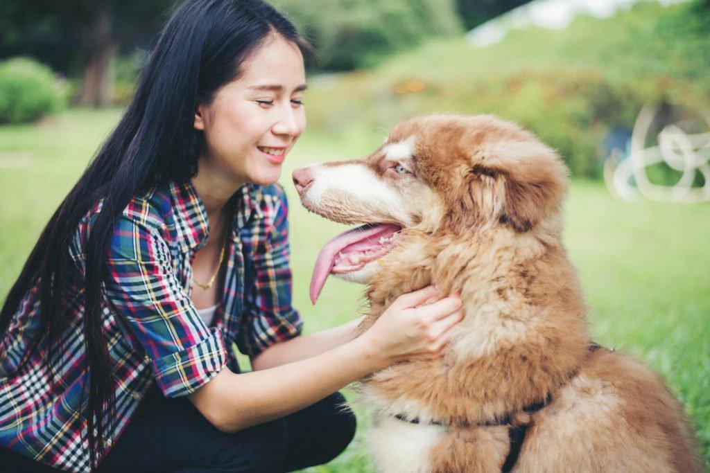 Banissez les légumes et les fruits de l'alimentation de votre chien, pour régler ses soucis de mauvaise haleine