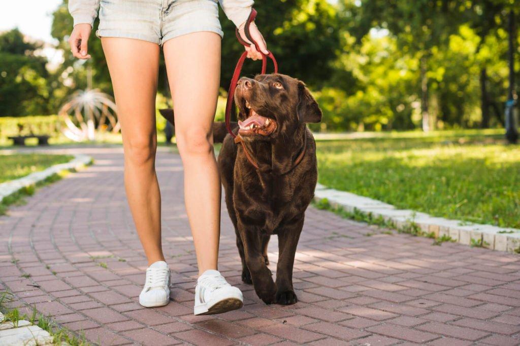 Peut-on soigner la mauvaise haleine du chien grâce à des remèdes de grand-mère ?