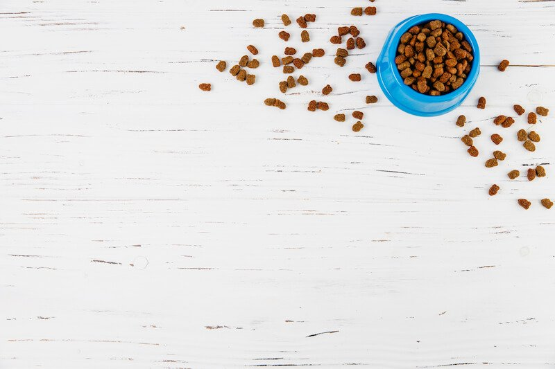 Mieux que le Smecta pour le chien qui a la diarrhée : une alimentation adaptée à ses besoins biologiques et naturels