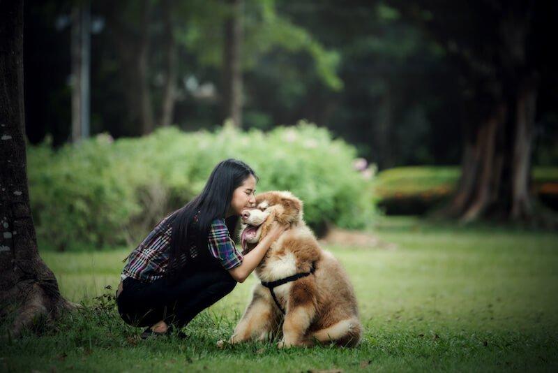 Faites cesser les vomissements du chien en l'aidant à retrouver une alimentation adaptée à ses besoins physiologiques réels