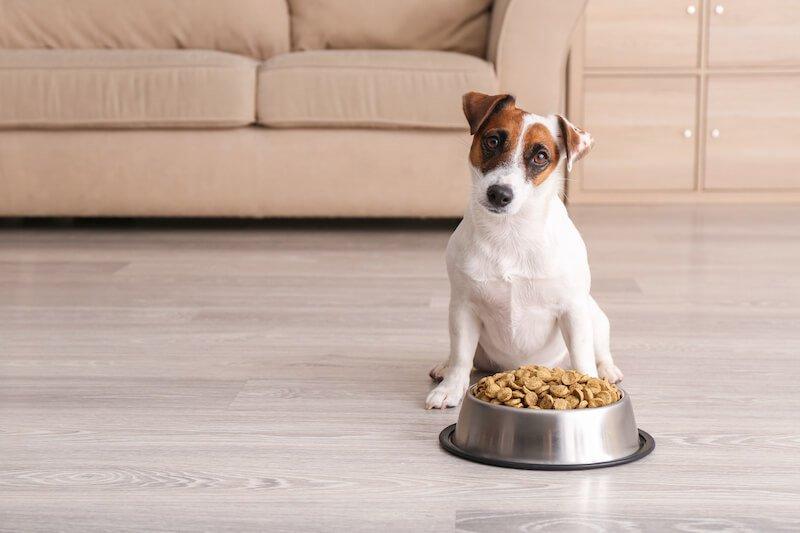 Cette alerte sur les croquettes doit pousser les propriétaires à vérifier la composition de l'alimentation de leurs chiens