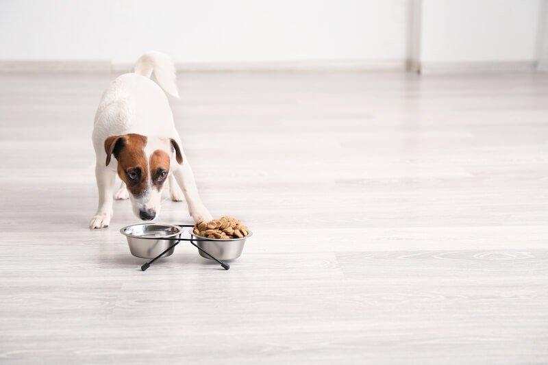 L'alimentation est bien souvent la source de la pancréatite du chien