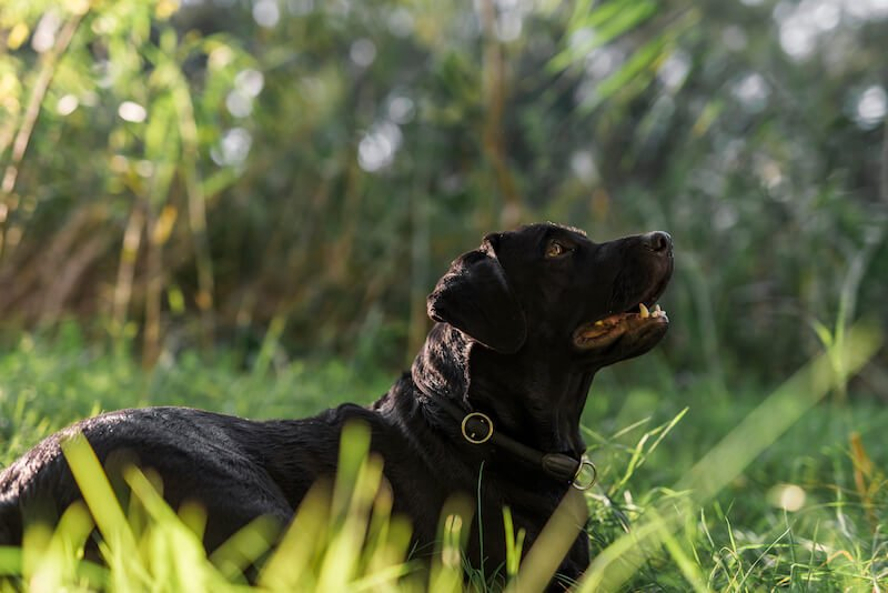 Le sang dans les selles de votre chien peuvent être dûes à une intoxication ou à une gastro-entérite