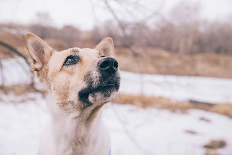Apprenez à bien administrer le vermifuge Drontal à votre compagnon, et à prévenir la récidive des vers chez le chien