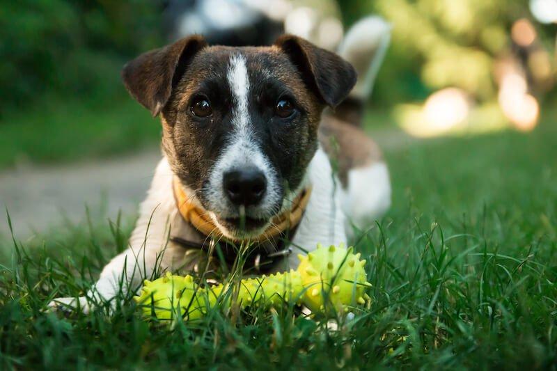 Faites attention aux contre-indications liées au vermifuge Drontal pour votre chien