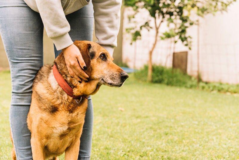 Comment guérir le chien qui boite ?