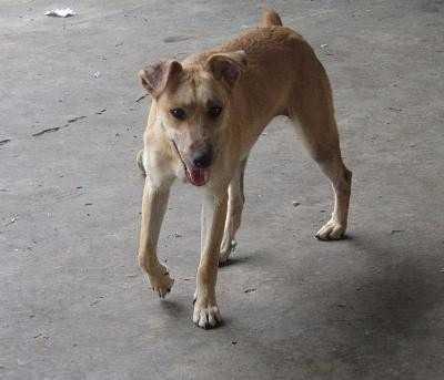 Le problème du chien qui boite de la patte avant droite est lié à un problème intestinal