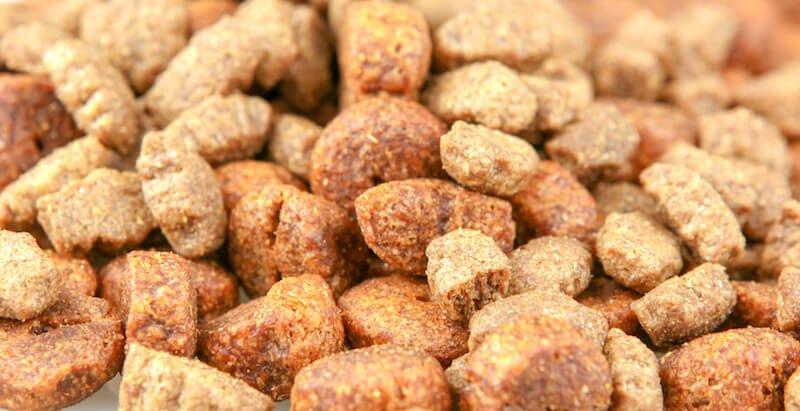 La nourriture étant à l'origine de la Coccidiose chez le chien, il vous faut lui choisir une alimentation adaptée pour éviter la récidive