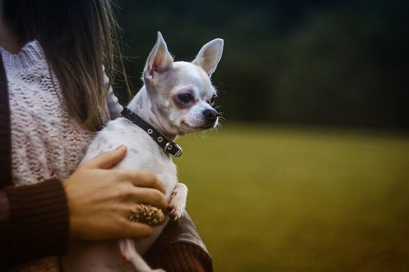 Un chien peut tout à faire guérir de sa pancréatite : voici comment !