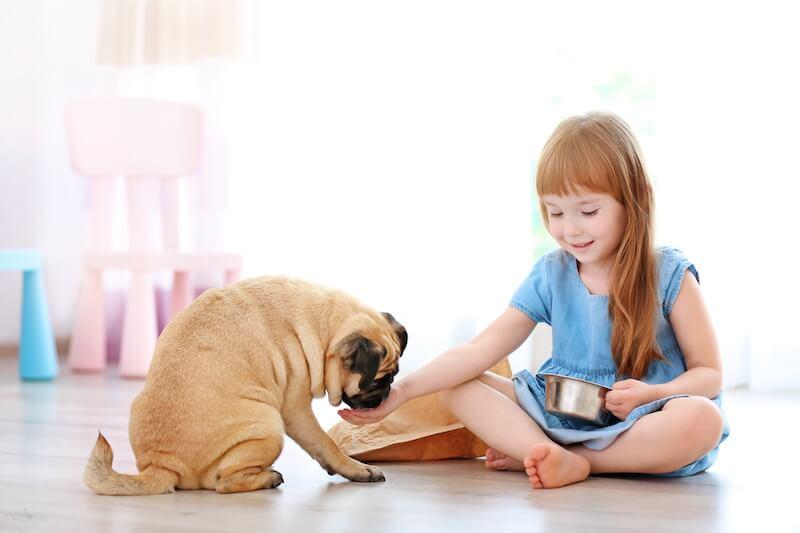 Cette alerte aux croquettes toxiques doit mener les propriétaires à surveiller la composition de la gamelle de leur chien et chat