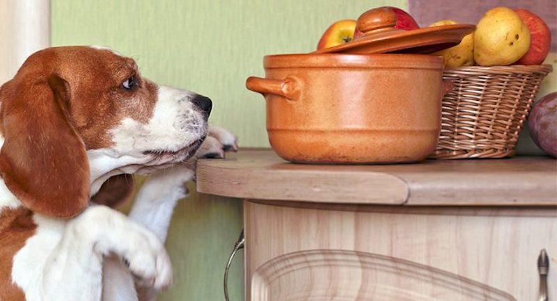 Les légumes sont souvent à l'origine du sang dans la diarrhée du chien