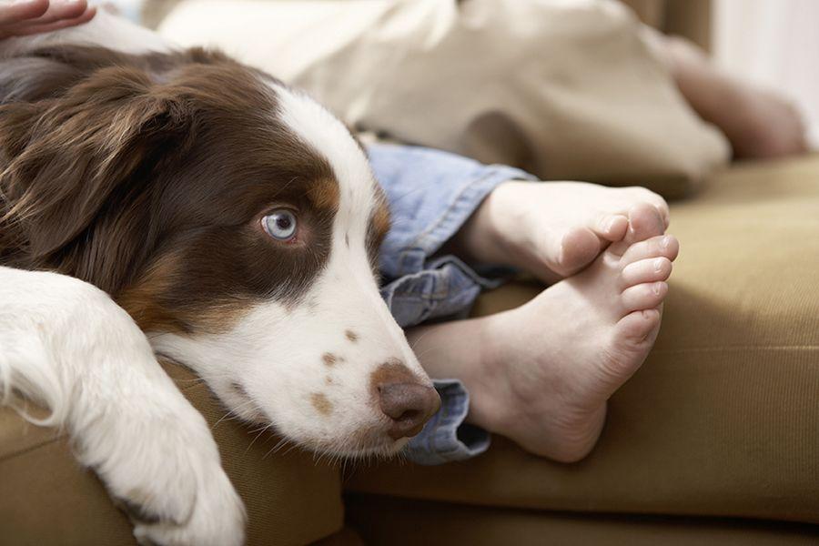 Demandez un dépistage de la Coccidiose pour traiter efficacement les diarrhées jaunes du chien