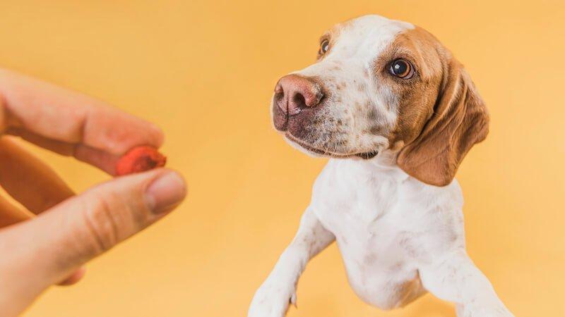 Existe-t-il une croquette anti-diarrhée jaune pour chien ?