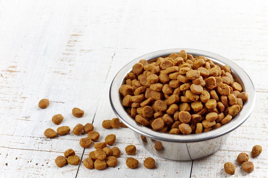 Quelles croquettes anti-diarrhée et anti-selles molles pour votre compagnon ?