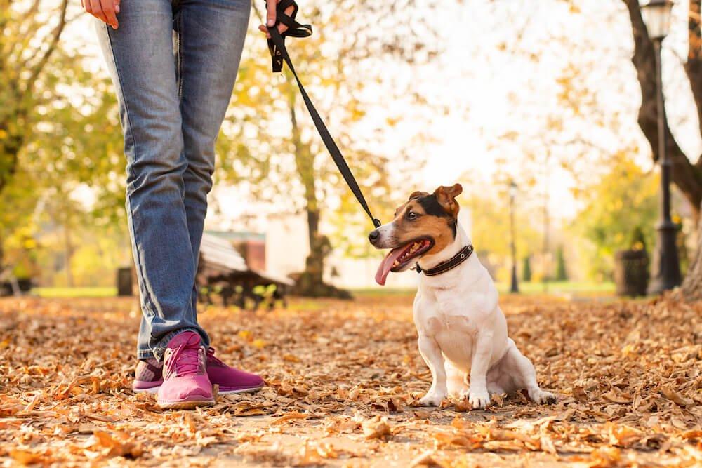 Les médicaments ou la nourriture peuvent être à l'origine des selles molles chez le chien