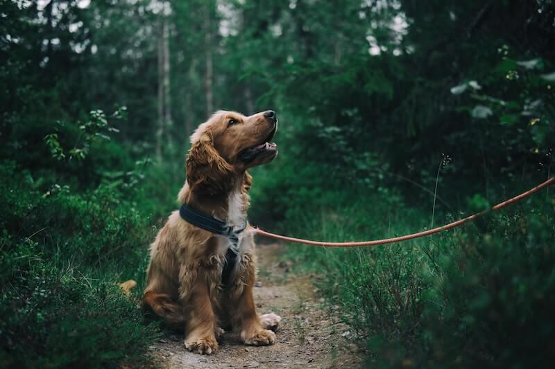 L'alimentation permet d'éviter la récidive du chien infesté de vers ou protozoaires