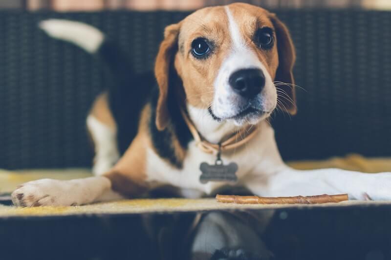 Les effets secondaires des vermifuges pour chien dépendent des différents médicaments, et sont plus ou moins graves