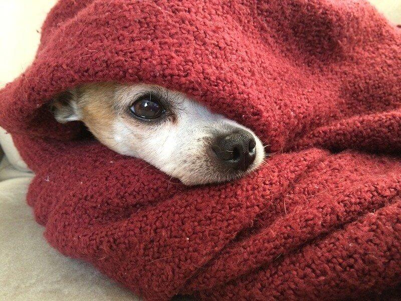 Le meilleur vermifuge naturel pour chien existe-t-il ?