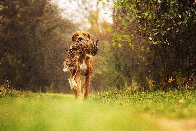Quelle croquette anti-diarrhée pour faire disparaître les substances gluantes dans les selles du chien ?
