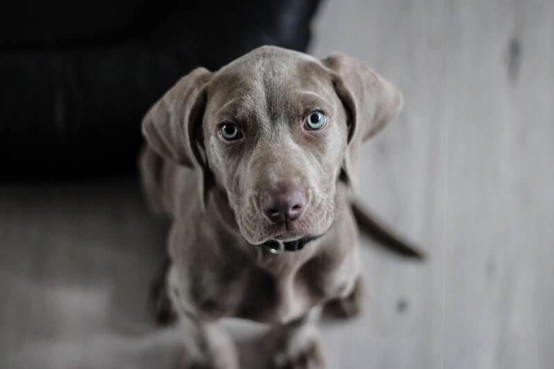 Apprenez à décrypter les symptômes de la cystite chez le chien