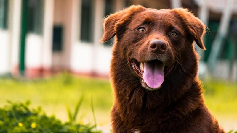 Quel traitement envisager contre la cystite chez le chien ?