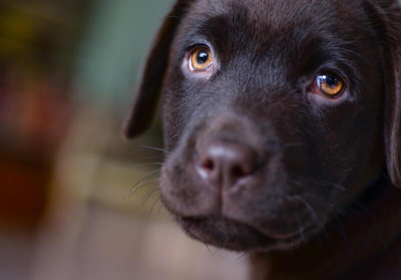 Les médicaments contre la diarrhée du chien en pharmacie ne suffisent pas pour éviter la récidive : l'alimentation est clé