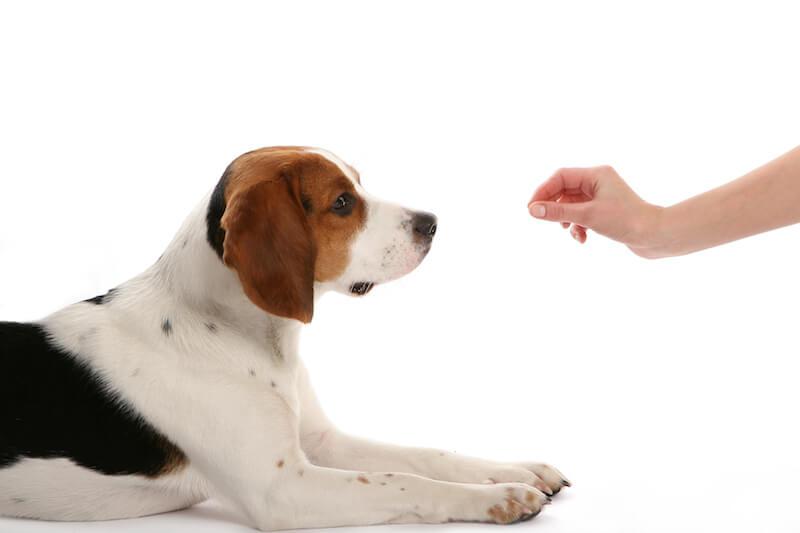 Seule une bonne croquette hypoallergénique peut vous aider à venir à bout de l'allergie alimentaire du chien