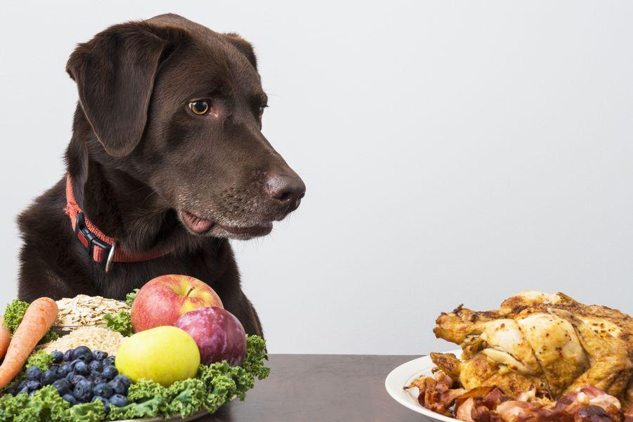 Certains végétaux et les protéines de mauvaise qualité peuvent être à l'origine de l'allergie alimentaire du chien