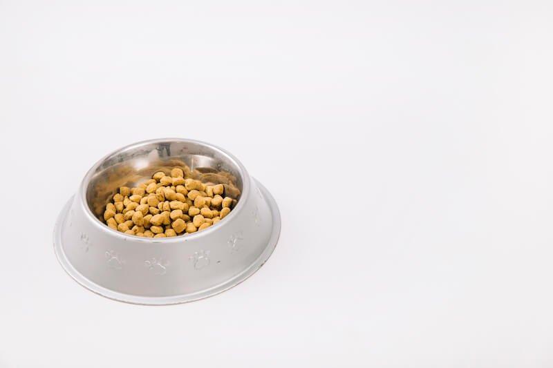 Attention à bien respecter la physiologie naturelle du chien pour choisir les croquettes qui le guériront de son atopie du chien