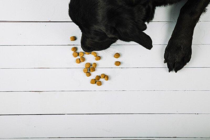 De véritables croquettes anti-diarrhée : voilà le remède naturel aux diarrhée du chien