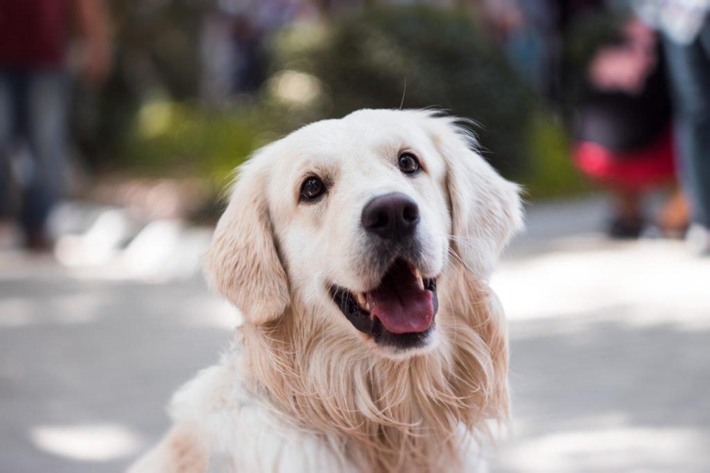Éliminez de son alimentation ces 3 éléments pour venir à bout de la diarrhée chronique du chien