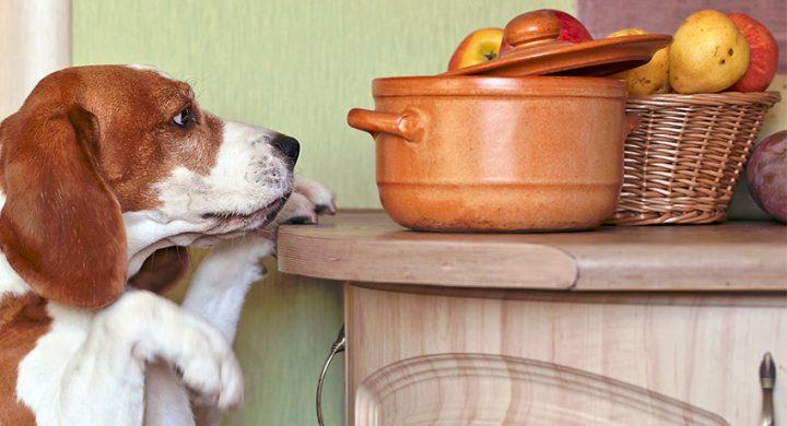 Les légumes, fruits, tubercules et légumineuses sont à l'origine de bon nombre de dermatites chez le chien