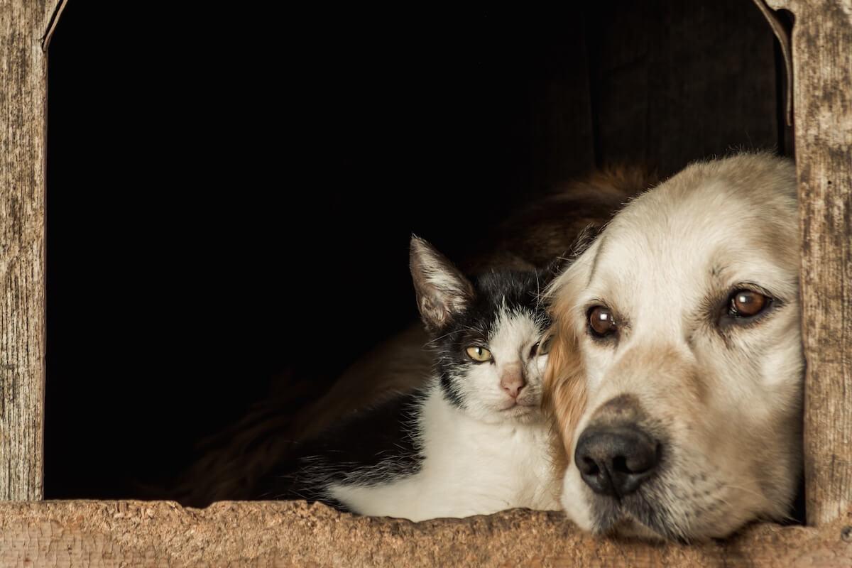 Ce qu'il faut savoir sur le Milbactor pour chat ou pour chien