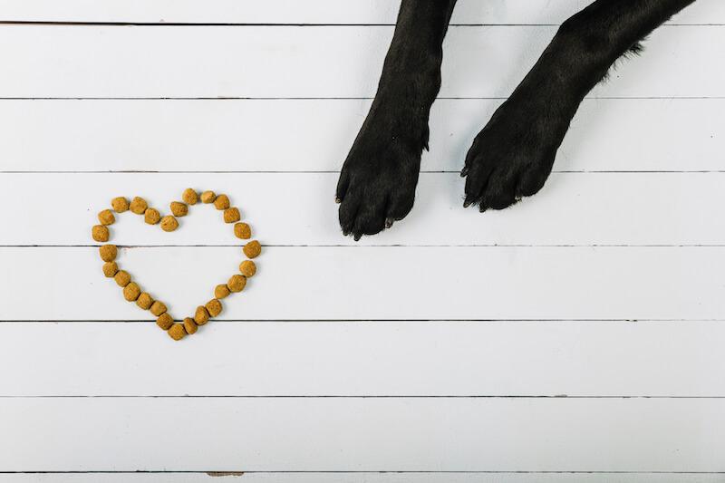 Le chien se gratte, et les remèdes de grand-mère ne sont que ponctuellement bénéfiques : optez pour une nourriture adaptée