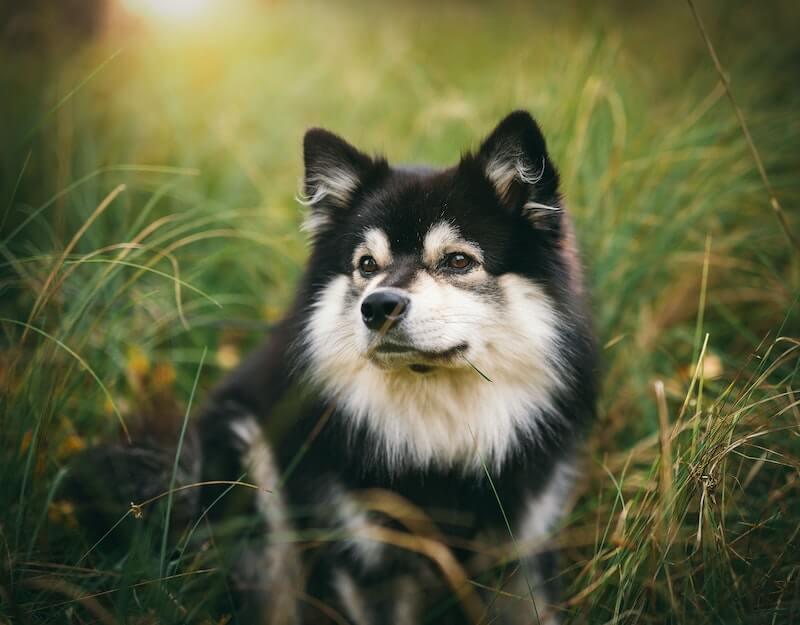 La solution de l'éleveur pour mettre fin aux vomissements jaunes du chien