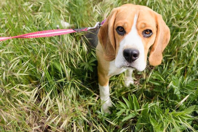 Attention à la composition de certaines croquettes gastro-intestinales pour chien disponibles sur le marché !