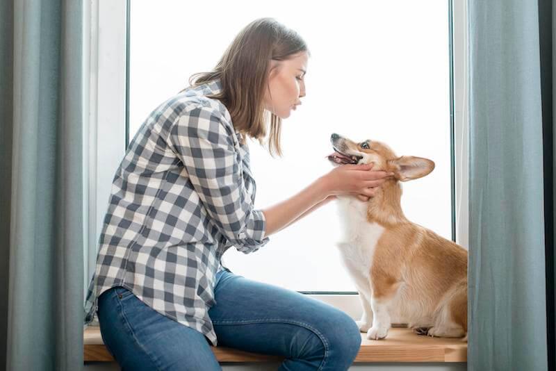 Quel est le meilleur traitement contre la démodécie du chien ?