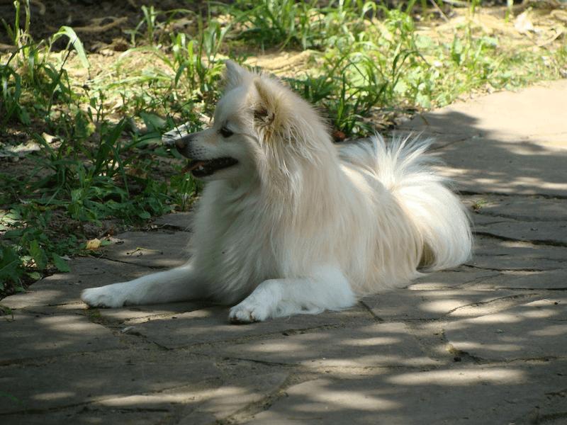 Témoignage de Cara, ou une insuffisance rénale chez un chien âgé soignée