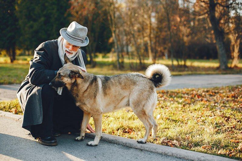 Soigner l'insuffisance rénale du vieux chien est possible