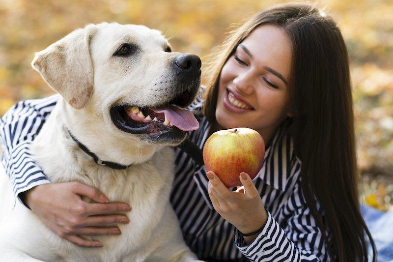 Les légumes ont un effet nocif sur le chien, qui se gratte les pattes et souffre de dermatite