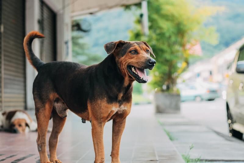 Comment guérir le chien plantigrade ou le chien panard ?