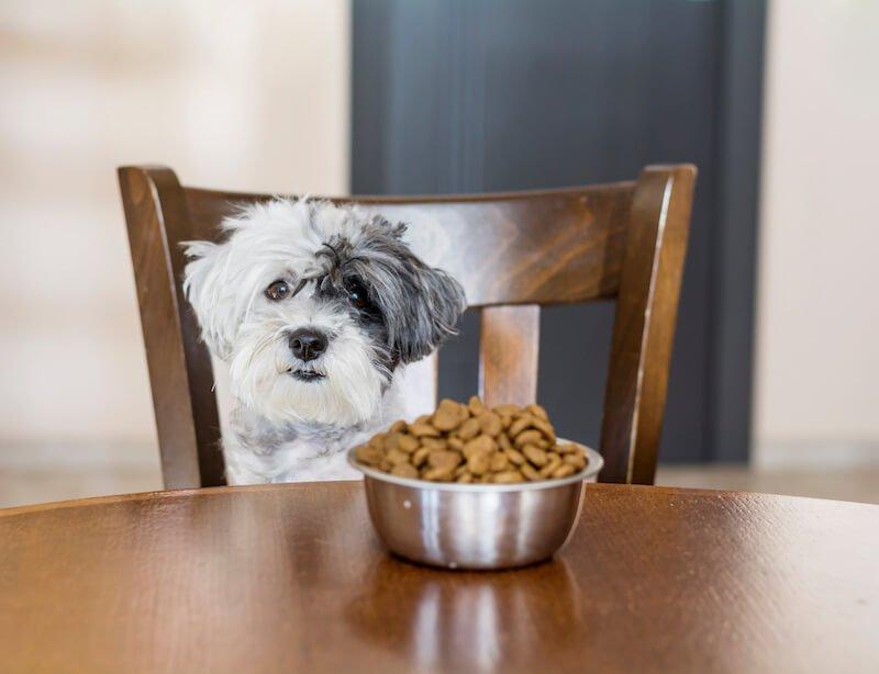 L'alimentation du chien qui boite de la patte arrière est cruciale pour le guérir de sa boiterie ou son arthrose