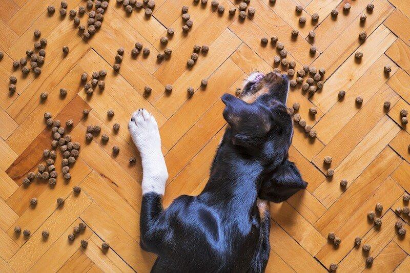 Attention à l'alimentation du chien qui pète : c'est de là que viennent ses soucis