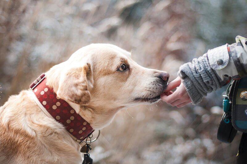 Pour soigner l'insuffisance pancréatique du chien, attention au contenu de sa gamelle